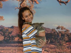 Cuddle and Koala (optional extra cost) at Kuranda Koala Gardens