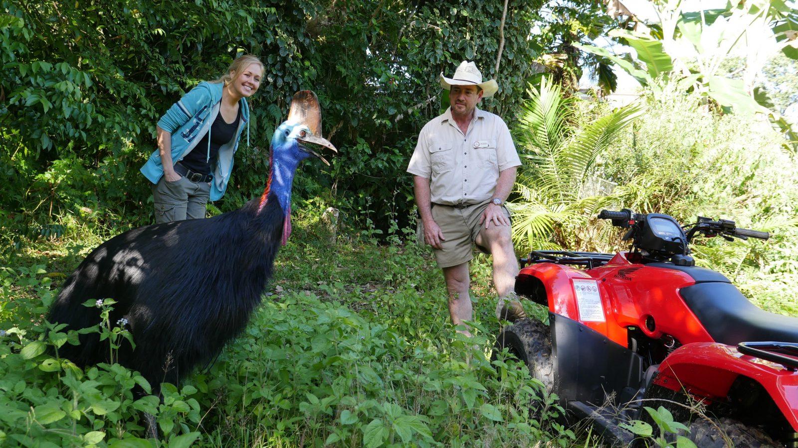 Elusive cassowary