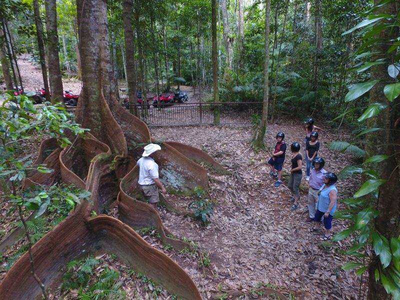 Amazing rainforest trees