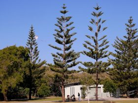 Kurrawa Park trees