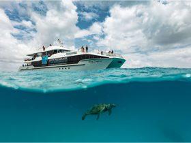 Turtles, Island, Reef