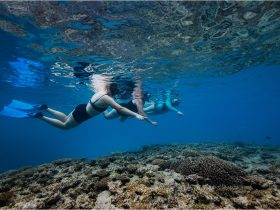 Group of 3 people snorkeling over reef at Lady Musgrave Island