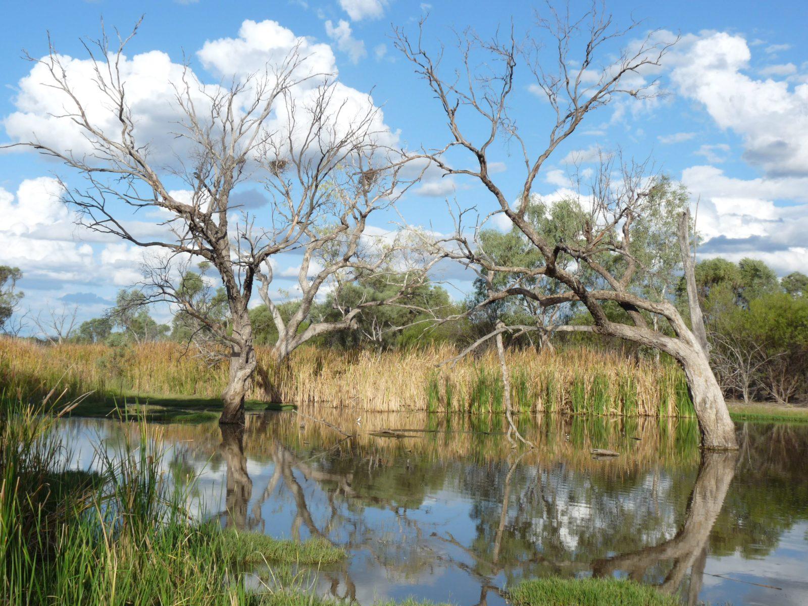 Lagoon Creek