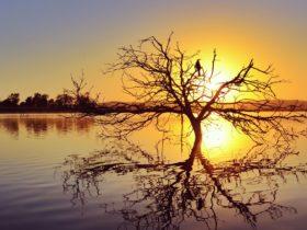 Lake Dyer