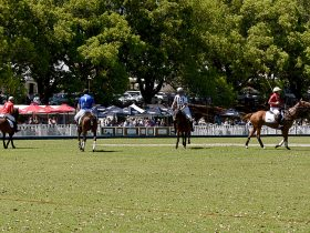 Spring Polo, Carnival of Flowers