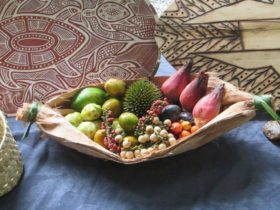 Mandingalbay Yidinji Ecocultural Tours