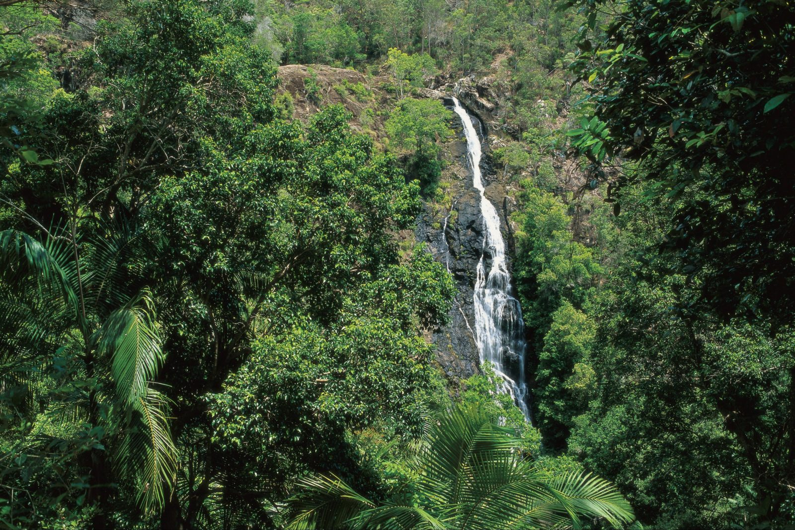View of Mapleton Falls in rainforest.