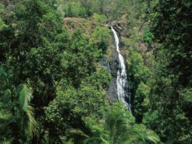 View of Mapleton Falls in rainforest.