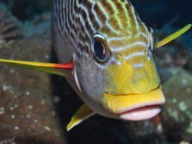 Michaelmas Reef Dive Site