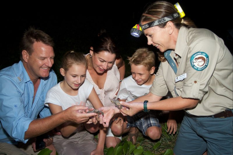 Interact with the turtle hatchlings at Mon Repos