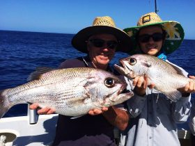 Brisbane Fishing Charter