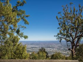 View of Rockhampton from summit.