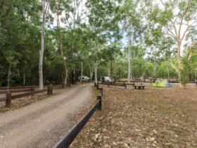 Camping area set in bushland near Alligator Creek