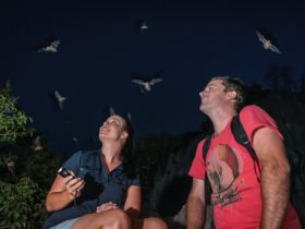 Couple at night surrounded by flying bats/