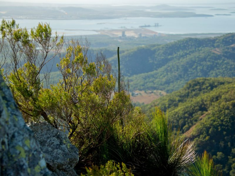 Mount Larcom View