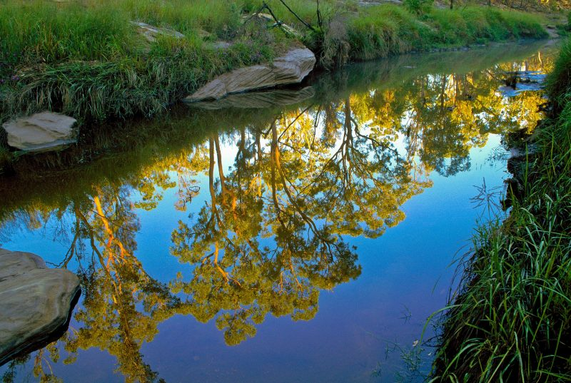 yellow foliage of trees is reflected in still waters of a creek.