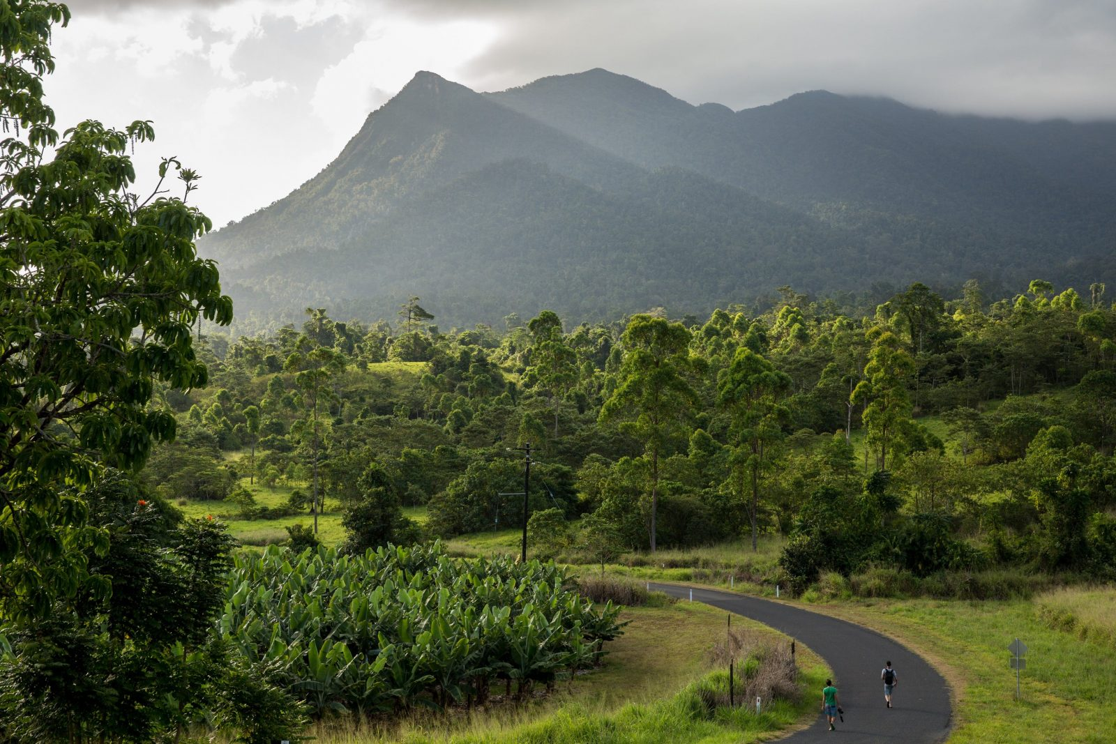 Banana Plantation at Mt. Bartle Frere