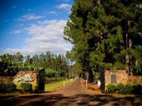 Pine tree lined entrance to Mt Uncle Distillery.