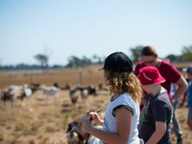 Looking at the milking goats.
