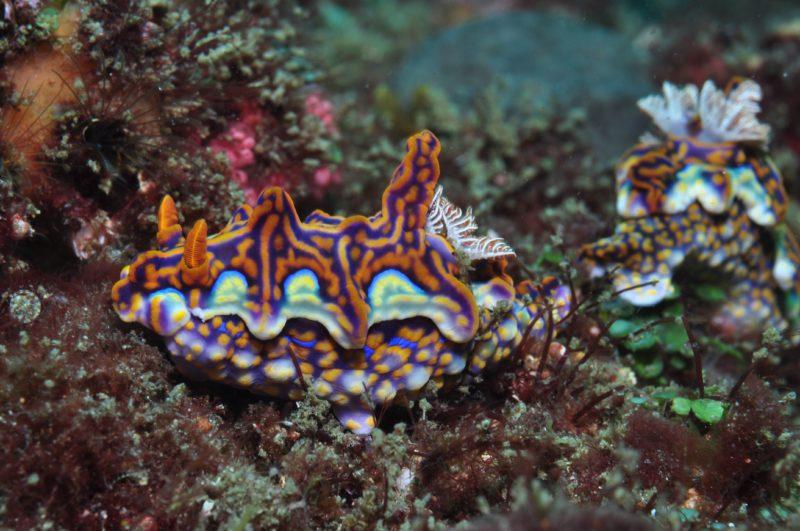 Nine Mile Reef