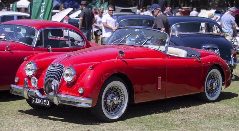 Jaguar on show