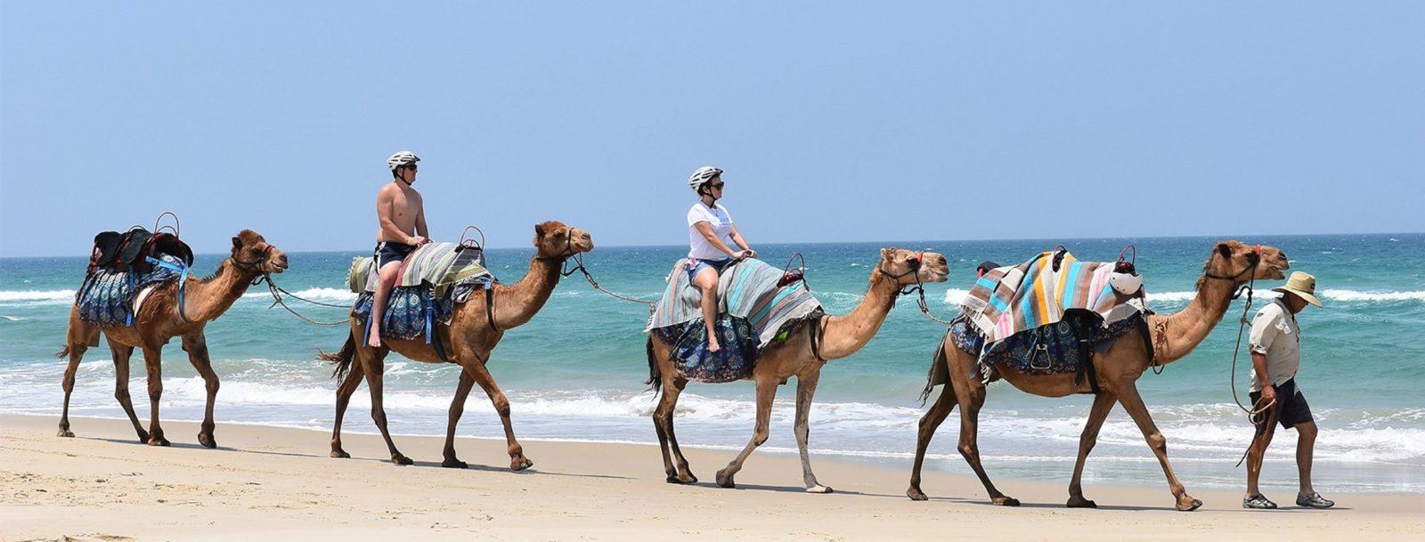 Noosa Camel Rides