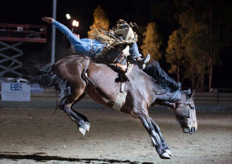 NQ Elite Rodeo