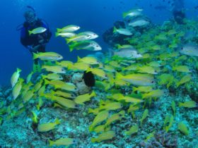 Northern Great Barrier Reef