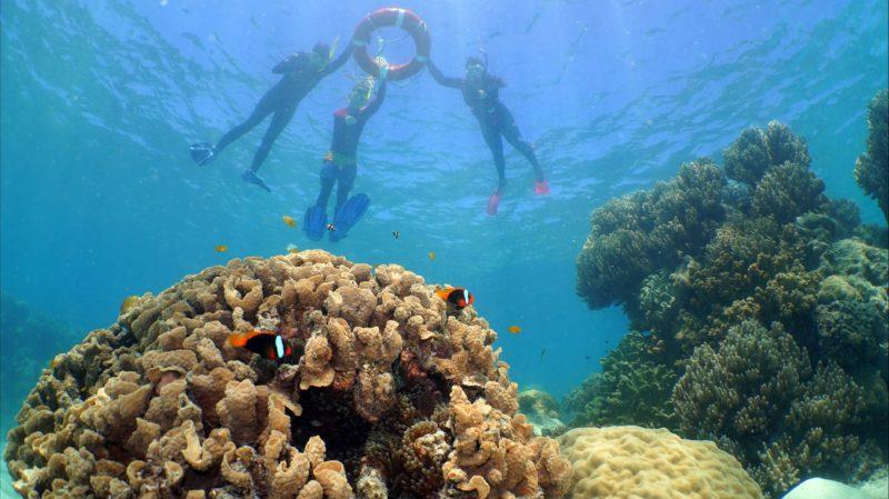 Ocean Spirit snorkel tour