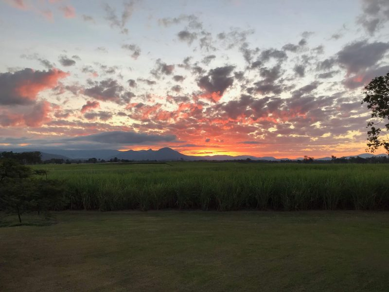 Sunset over cane