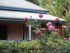 South Rose Garden The Shambles