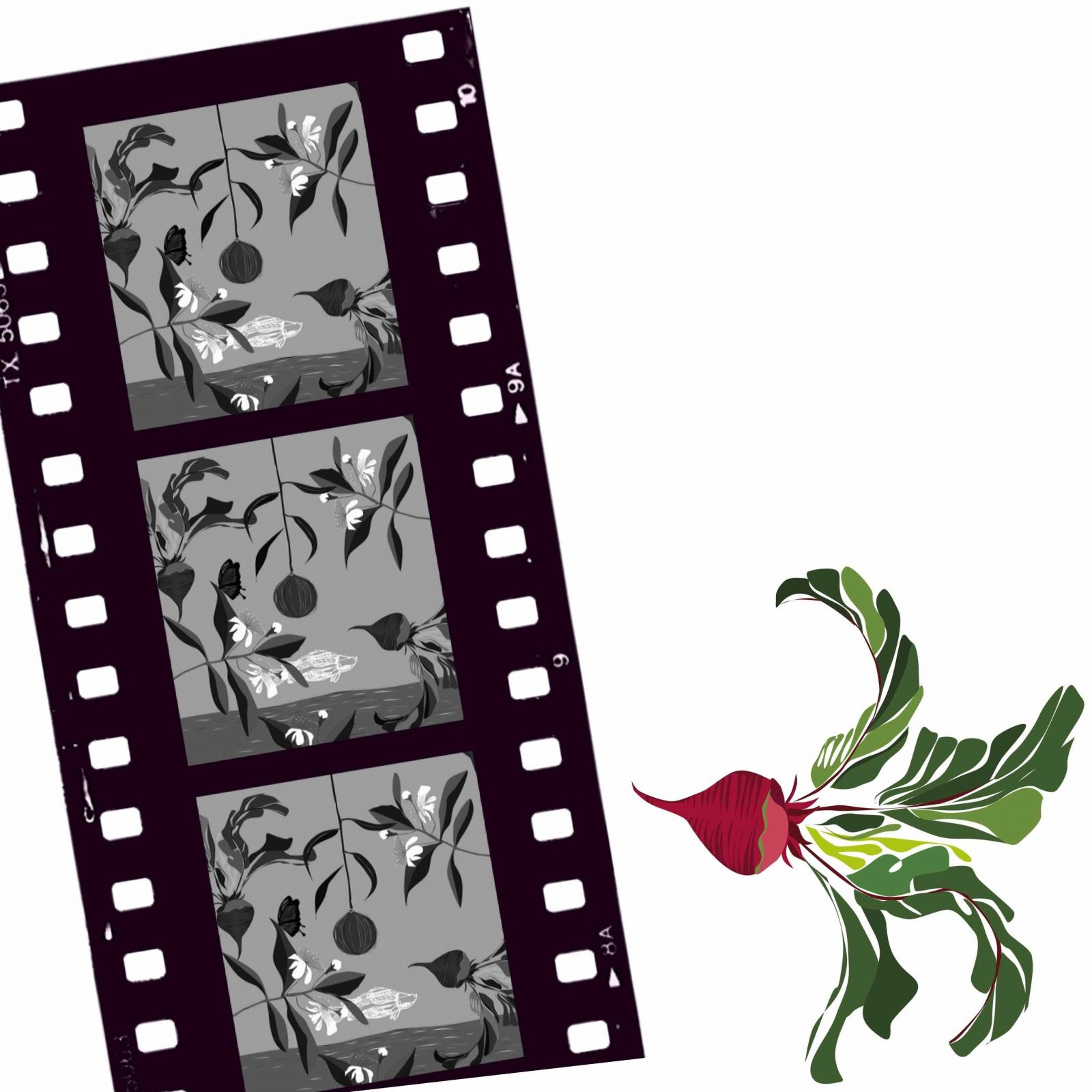 Old movie roll with greens , beet root outside