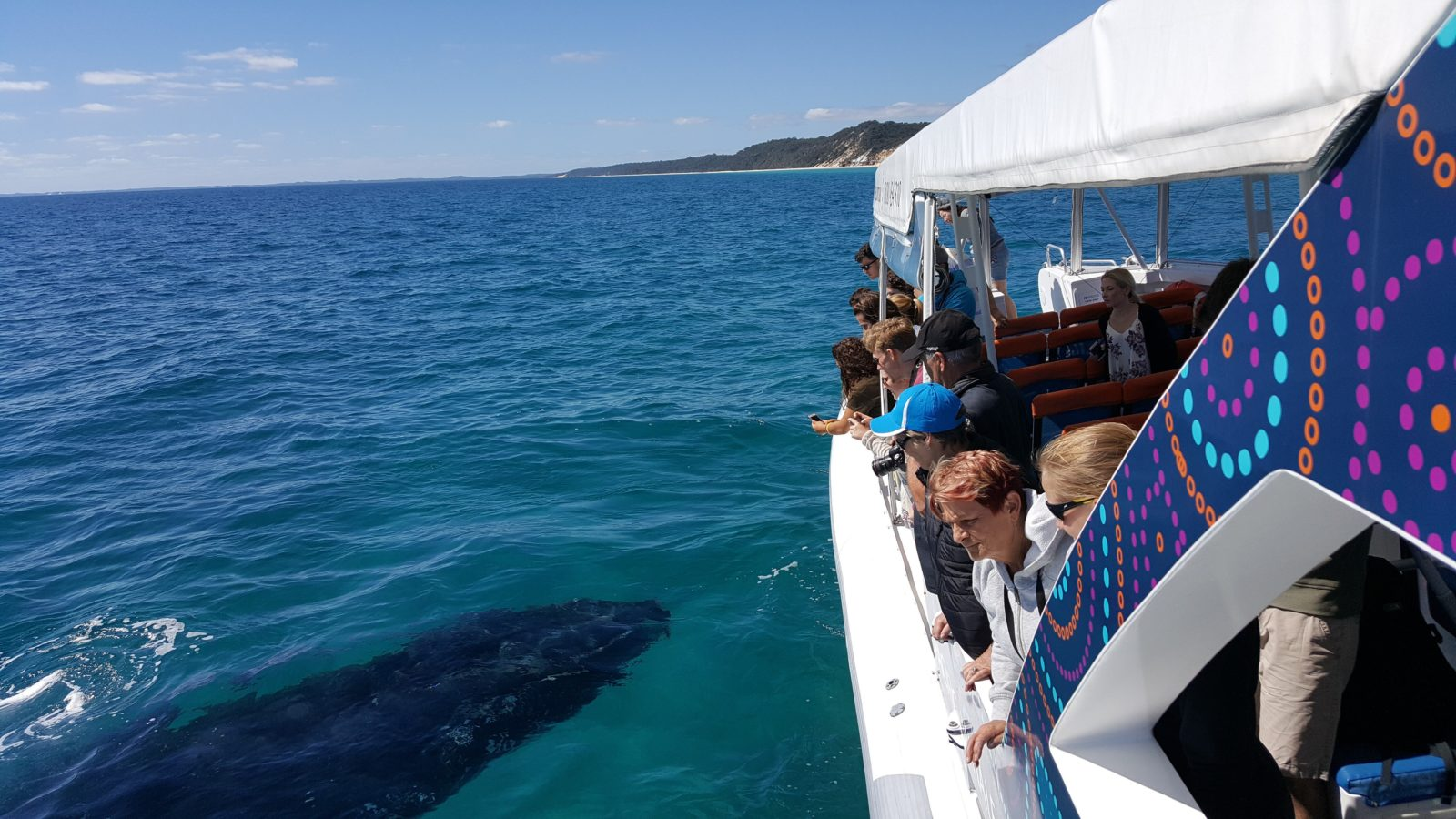 Whale Mugging Hervey Bay