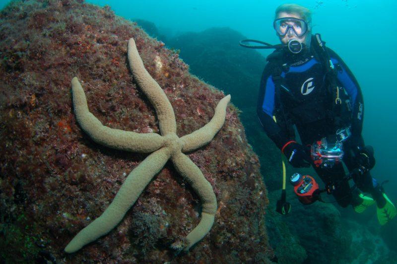 Palm Beach Reef