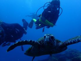 Turtle and diver at the Yongala.