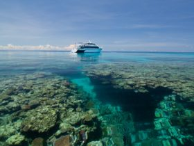 Dive the Great Barrier Reef with Pro Dive Cairns