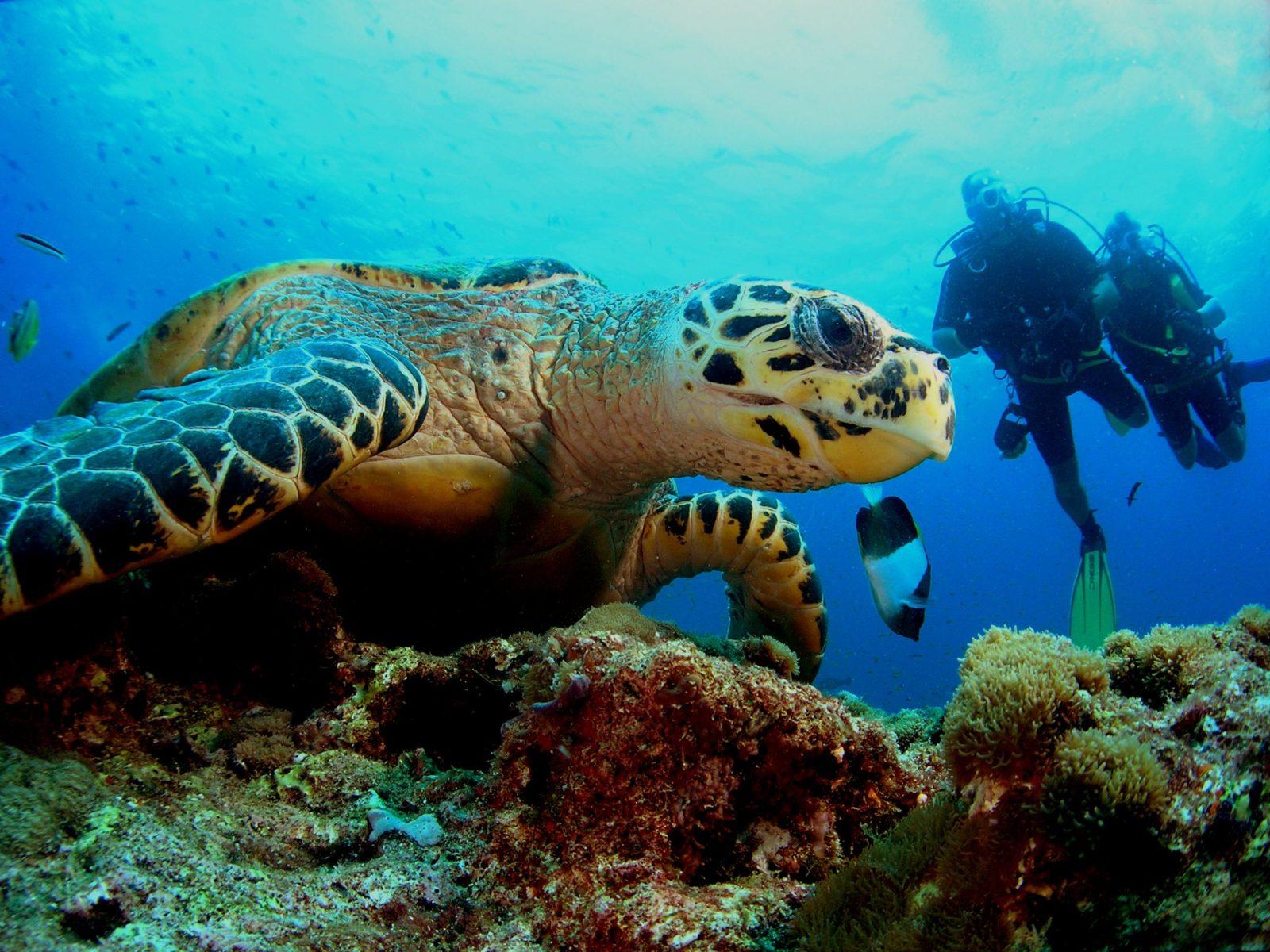 Great Barrier Reef Trip, Scuba Diving, Snorkel Trip,