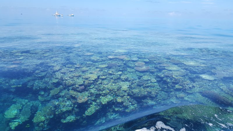 Glass out days at the Great Barrier Reef