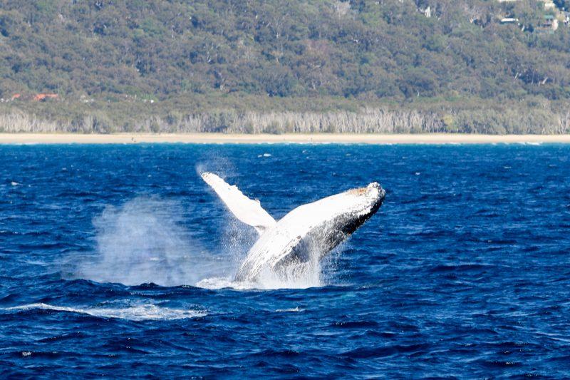 Yalingbila Whale Tours