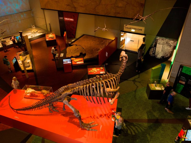 Queensland Museum's Lost Creatures Exhibition
