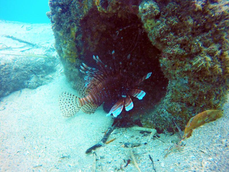 Gold Coast Scuba Diving
