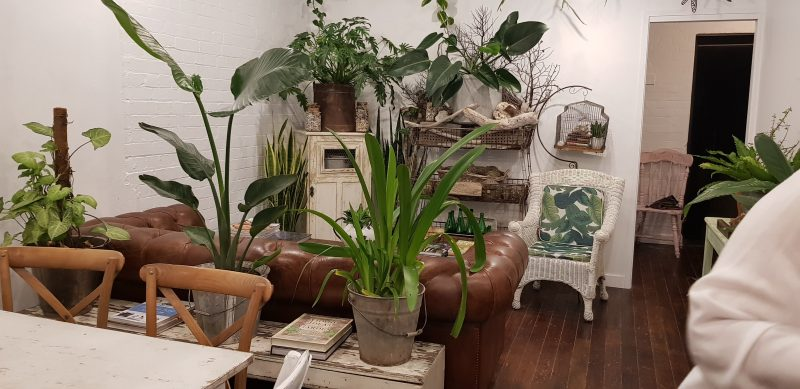 Sit on our beautiful leather lounge surrounded by greenery and vintage wares