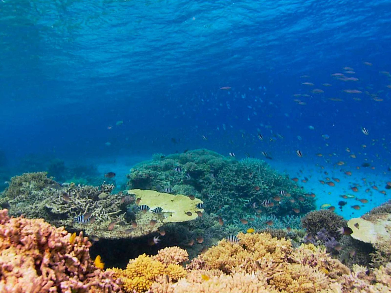 Recovery of the Great Barrier Reef
