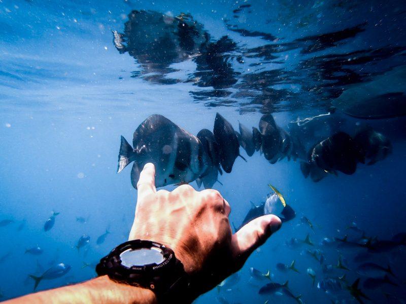 Snorkel, Fish, Boat, Ocean