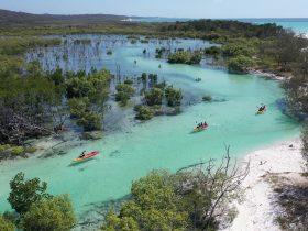 Kayaking Wathumba Creek