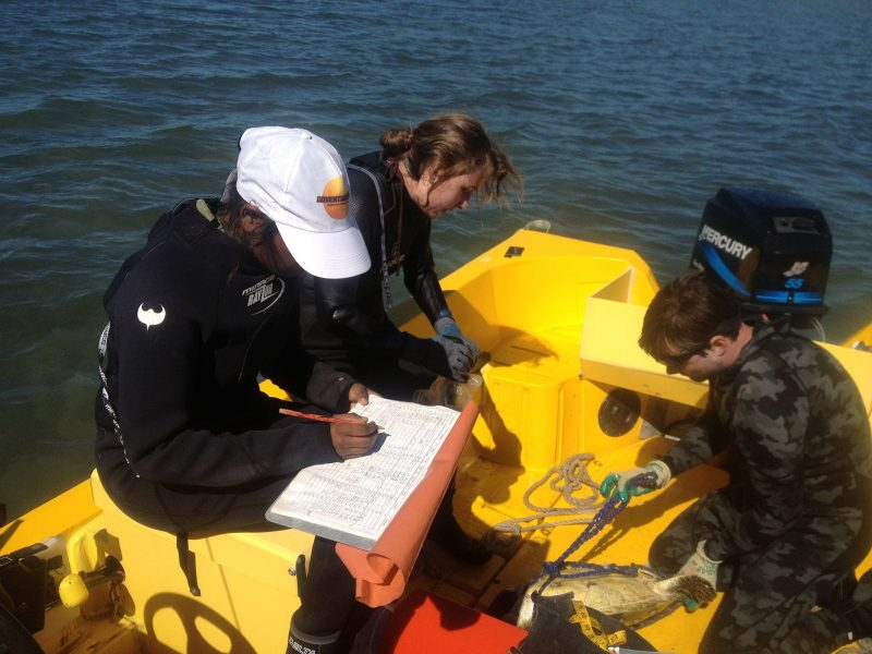 Scientists and Participants collecting data and examing a turtle