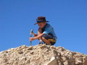 junior fossil hunter