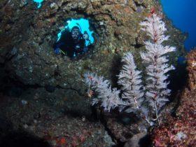Roberts Shoal Dive Site