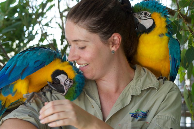 Two macaws with zookeeper at the Rockhampton Zoo