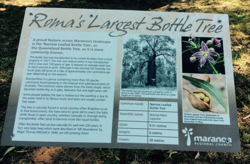 Roma's Largest Bottle Tree Sign